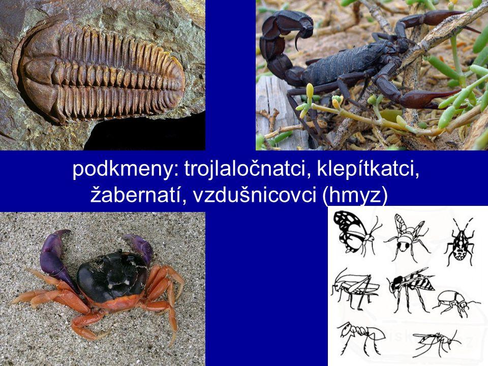 členovci druhově nejpočetnější kmen živočichů (80%) vývoj z mnohoštětinatců .