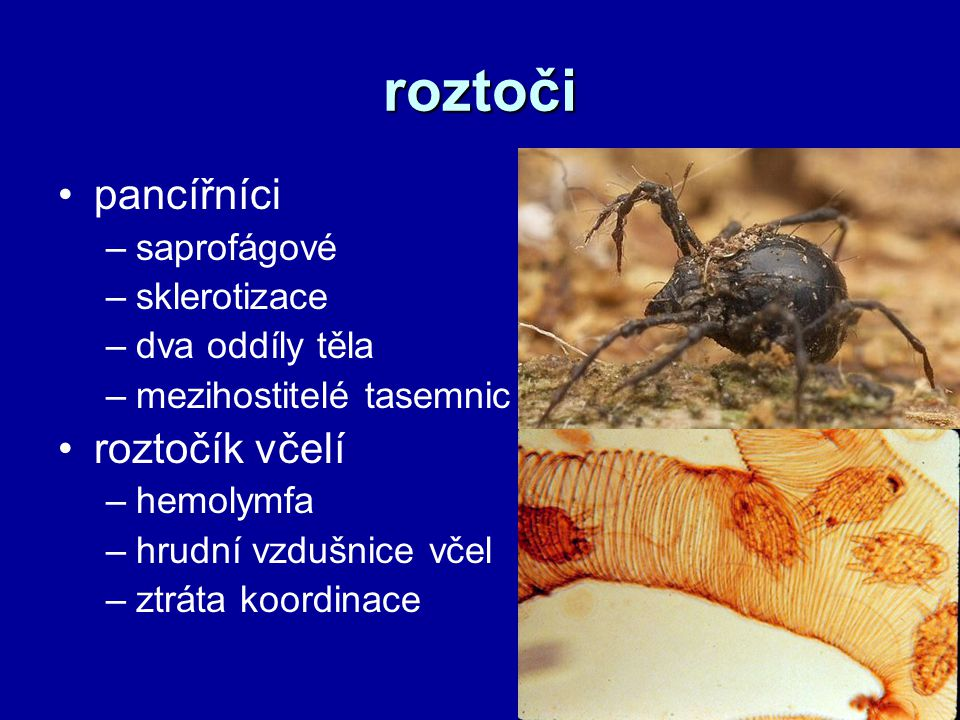 roztoči pancířníci –saprofágové –sklerotizace –dva oddíly těla –mezihostitelé tasemnic roztočík včelí –hemolymfa –hrudní vzdušnice včel –ztráta koordinace