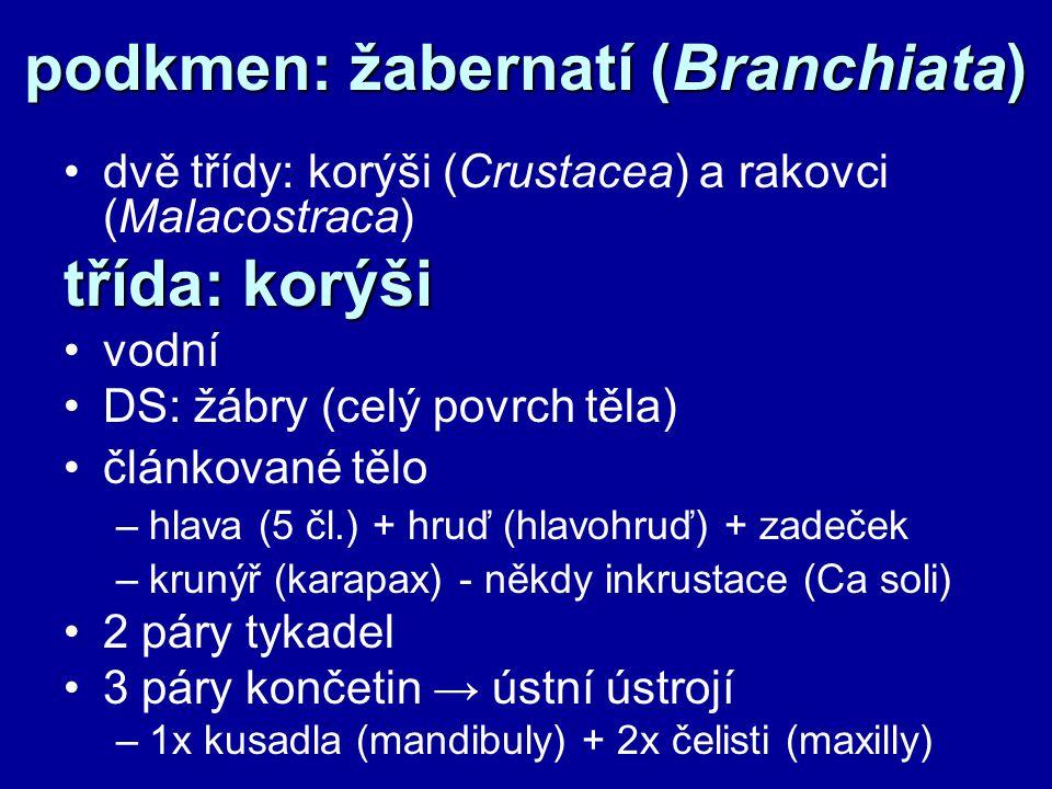 podkmen: žabernatí (Branchiata) dvě třídy: korýši (Crustacea) a rakovci (Malacostraca) třída: korýši vodní DS: žábry (celý povrch těla) článkované tělo –hlava (5 čl.) + hruď (hlavohruď) + zadeček –krunýř (karapax) - někdy inkrustace (Ca soli) 2 páry tykadel 3 páry končetin → ústní ústrojí –1x kusadla (mandibuly) + 2x čelisti (maxilly)