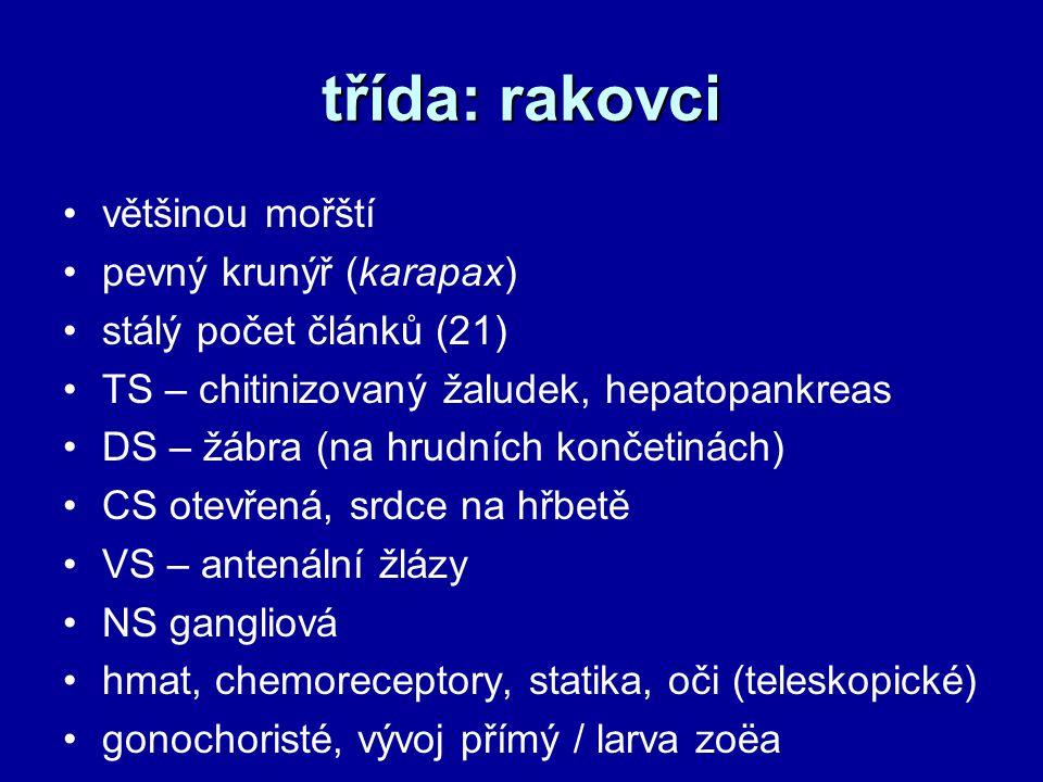 třída: rakovci většinou mořští pevný krunýř (karapax) stálý počet článků (21) TS – chitinizovaný žaludek, hepatopankreas DS – žábra (na hrudních končetinách) CS otevřená, srdce na hřbetě VS – antenální žlázy NS gangliová hmat, chemoreceptory, statika, oči (teleskopické) gonochoristé, vývoj přímý / larva zoëa