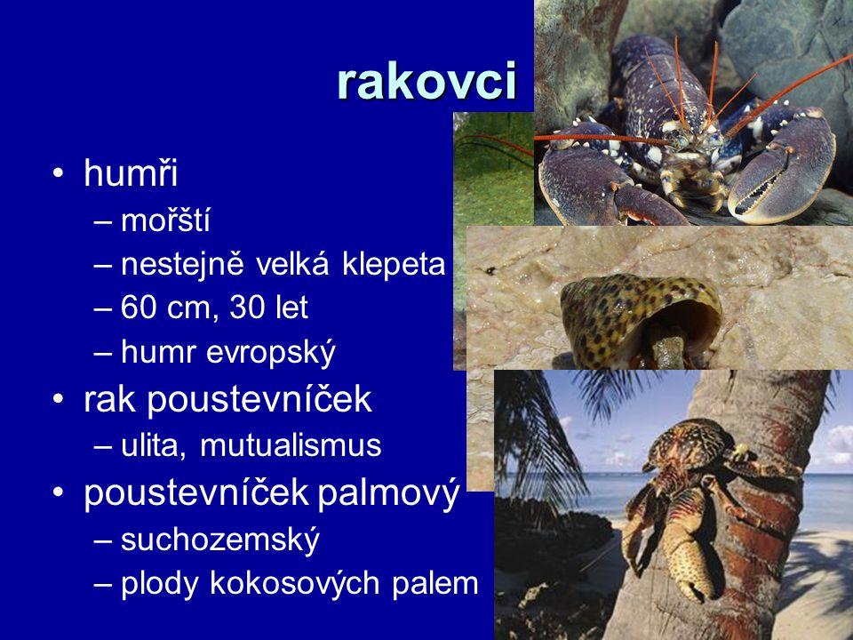 rakovci humři –mořští –nestejně velká klepeta –60 cm, 30 let –humr evropský rak poustevníček –ulita, mutualismus poustevníček palmový –suchozemský –plody kokosových palem