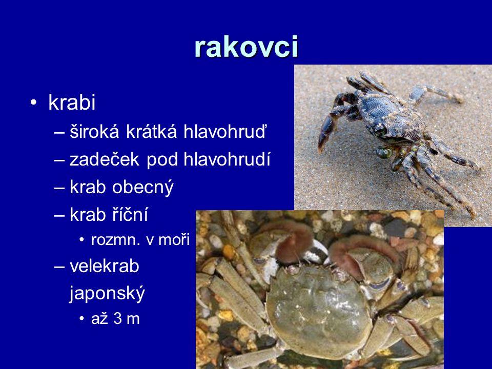 rakovci krabi –široká krátká hlavohruď –zadeček pod hlavohrudí –krab obecný –krab říční rozmn.