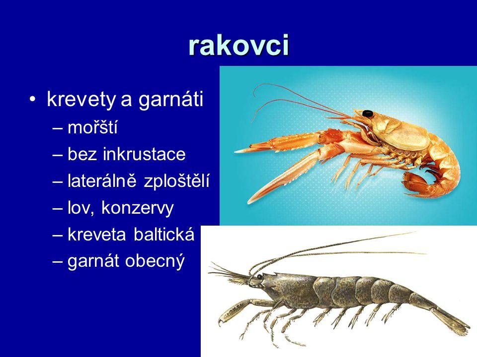 rakovci krevety a garnáti –mořští –bez inkrustace –laterálně zploštělí –lov, konzervy –kreveta baltická –garnát obecný