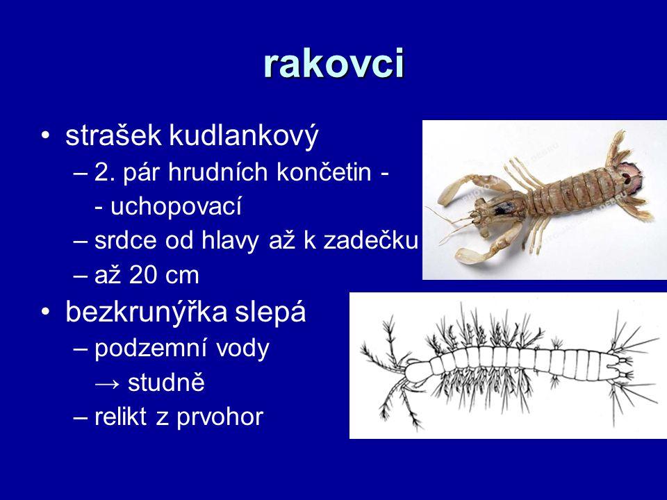 rakovci strašek kudlankový –2.