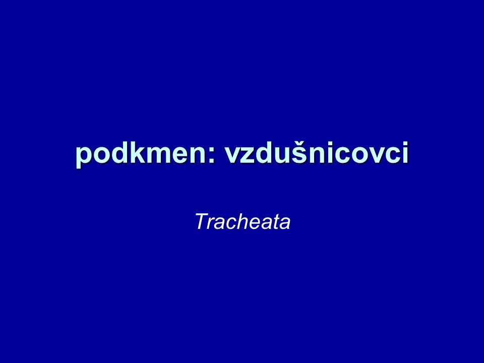 podkmen: vzdušnicovci Tracheata