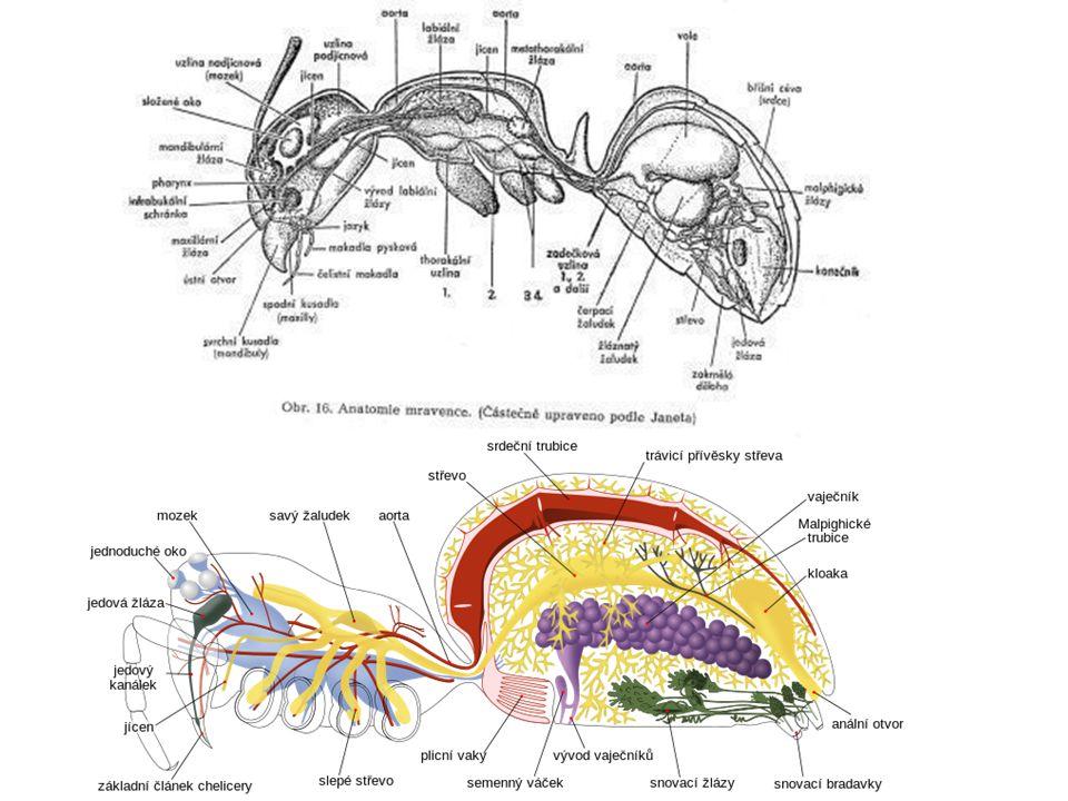 podkmen: trojlaločnatci (Trilobitomorpha) vyhynulí (prvohory) vůdčí zkamenělina, Joachim Barrande třída trilobiti asi 4000 druhů plovoucí, dna moří tři podélné laloky hlava, hruď, zadeček (ocasní štít) 1.