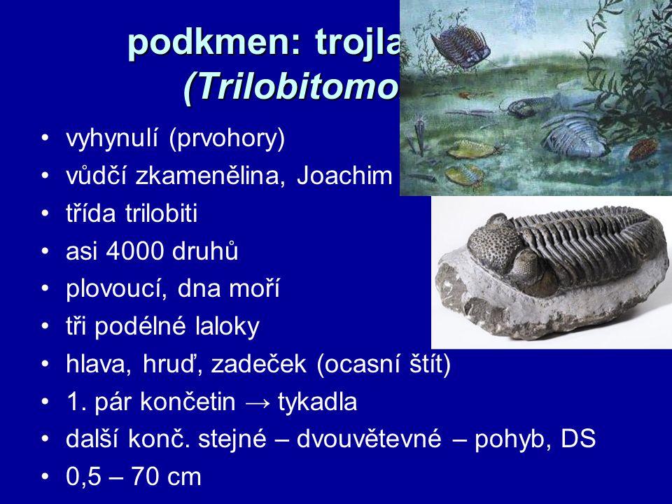 podkmen: klepítkatci (Chelicerata) hrotnatci, pavoukovci, nohatky mořští - primitivní formy suchoz.