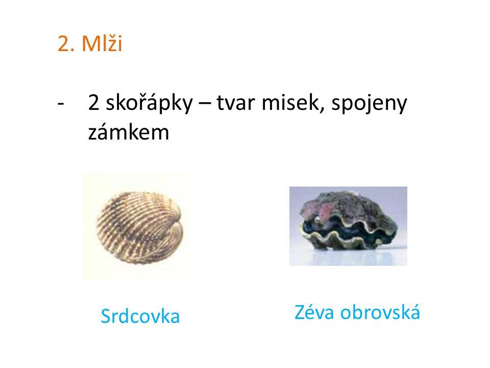 2. Mlži -2 skořápky – tvar misek, spojeny zámkem Srdcovka Zéva obrovská