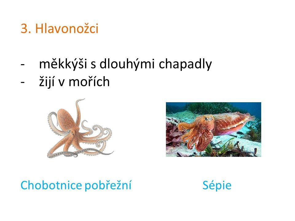 3. Hlavonožci -měkkýši s dlouhými chapadly -žijí v mořích Chobotnice pobřežníSépie