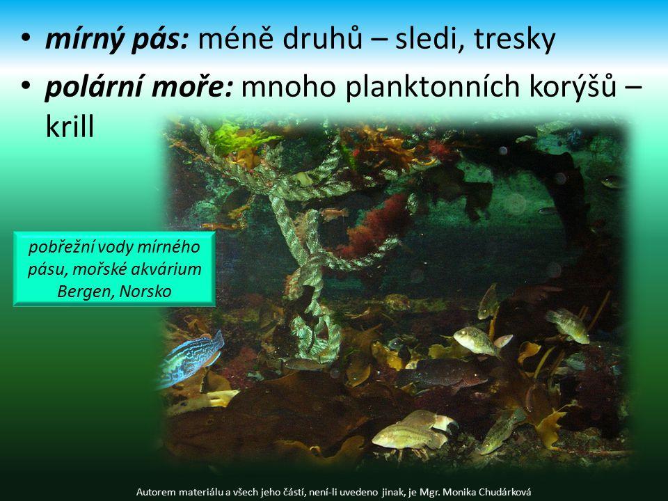 mírný pás: méně druhů – sledi, tresky polární moře: mnoho planktonních korýšů – krill Autorem materiálu a všech jeho částí, není-li uvedeno jinak, je Mgr.
