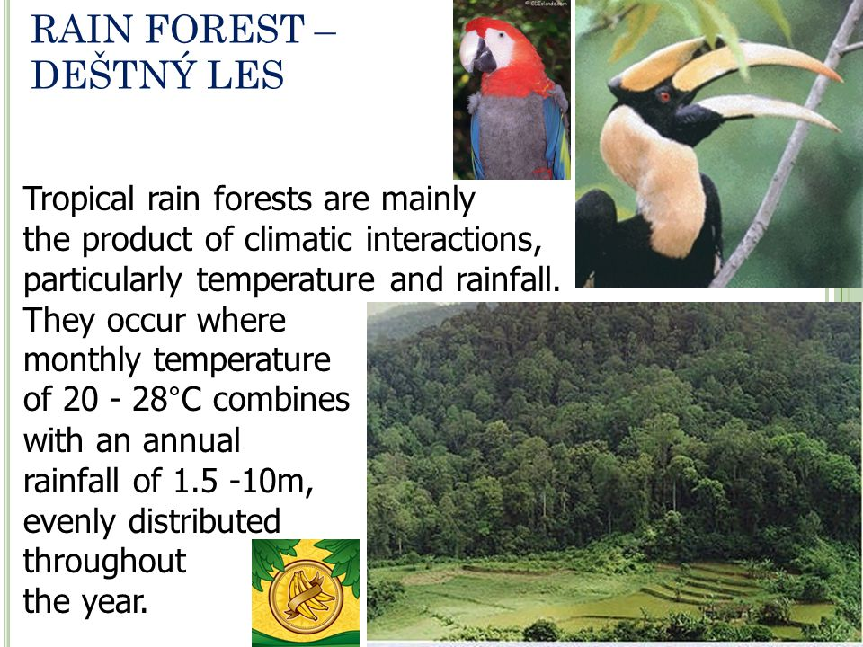 RAIN FOREST – DEŠTNÝ LES Tropical rain forests are mainly the product of climatic interactions, particularly temperature and rainfall. They occur wher