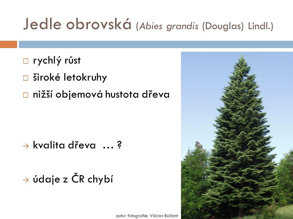Jedle obrovská (Abies grandis (Douglas) Lindl.)  rychlý růst  široké letokruhy  nižší objemová hustota dřeva  kvalita dřeva … .