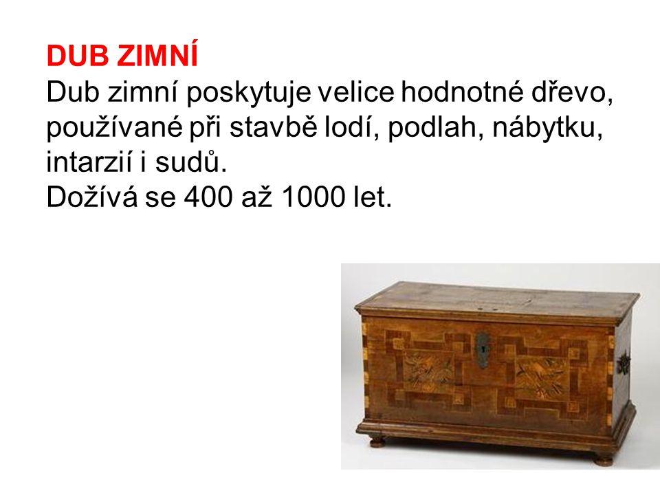 DUB ZIMNÍ Dub zimní poskytuje velice hodnotné dřevo, používané při stavbě lodí, podlah, nábytku, intarzií i sudů. Dožívá se 400 až 1000 let.