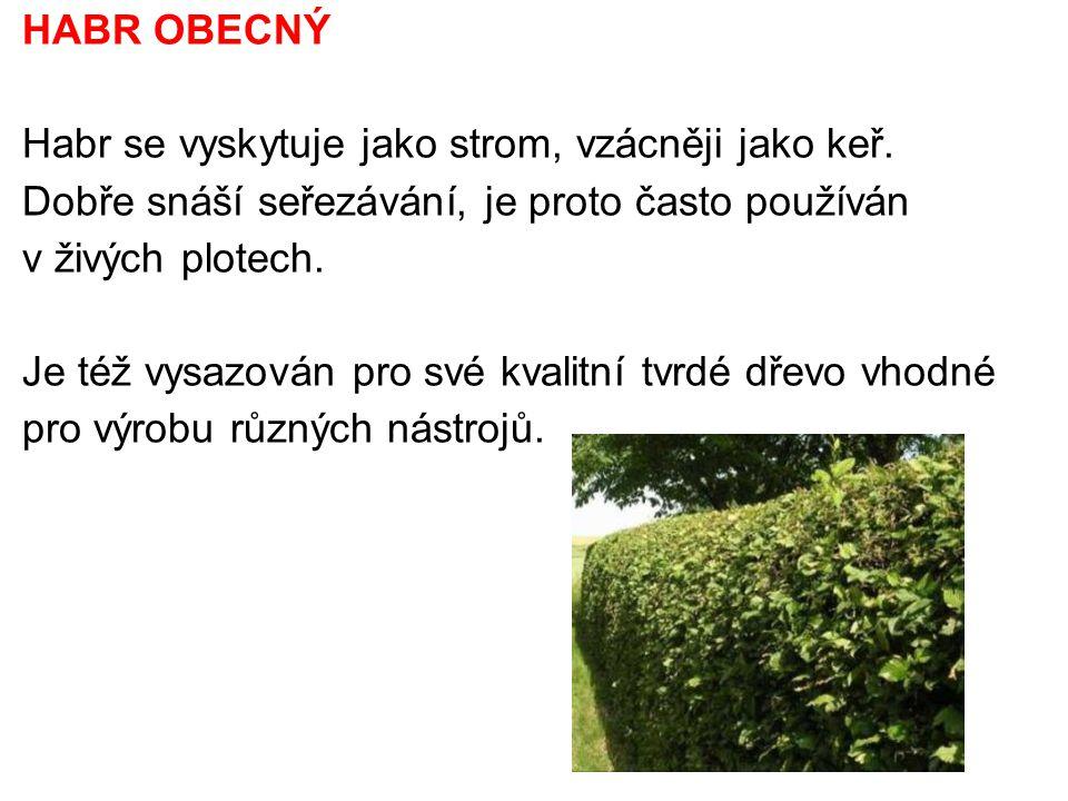 HABR OBECNÝ Habr se vyskytuje jako strom, vzácněji jako keř. Dobře snáší seřezávání, je proto často používán v živých plotech. Je též vysazován pro sv