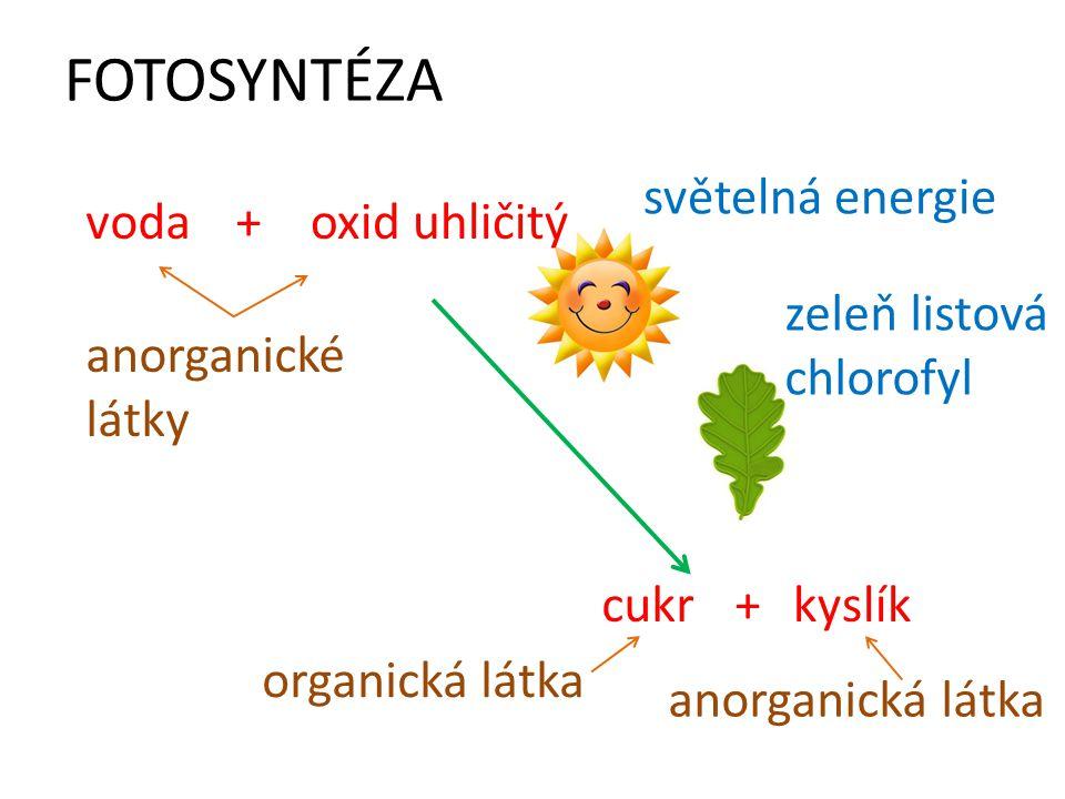 FOTOSYNTÉZA vodaoxid uhličitý+ cukr+kyslík světelná energie zeleň listová chlorofyl anorganické látky organická látka anorganická látka