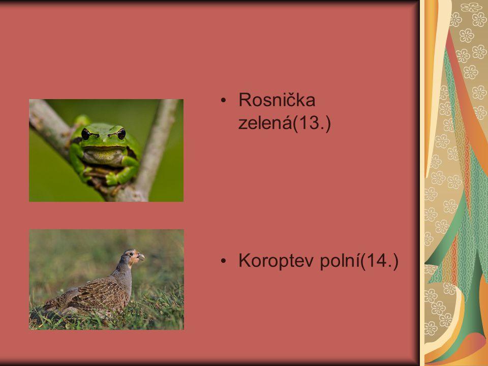 Rosnička zelená(13.) Koroptev polní(14.)