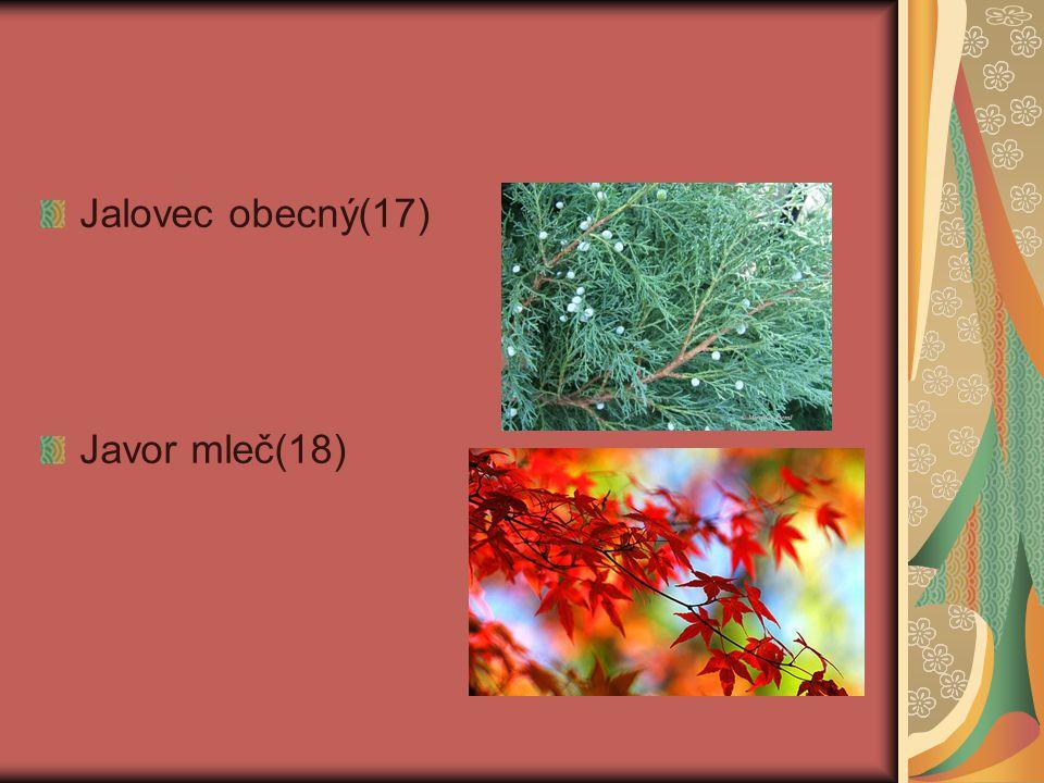 Jalovec obecný(17) Javor mleč(18)