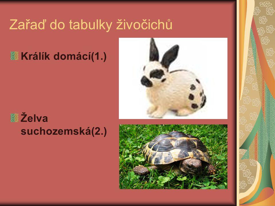 Zařaď do tabulky živočichů Králík domácí(1.) Želva suchozemská(2.)