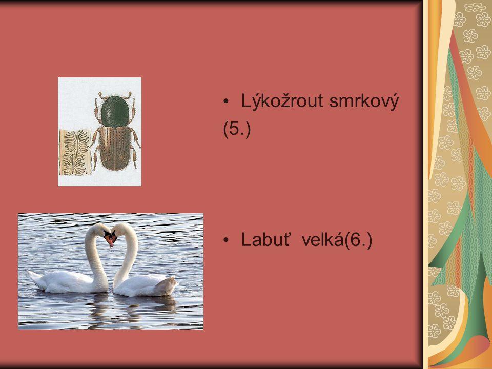 Lýkožrout smrkový (5.) Labuť velká(6.)