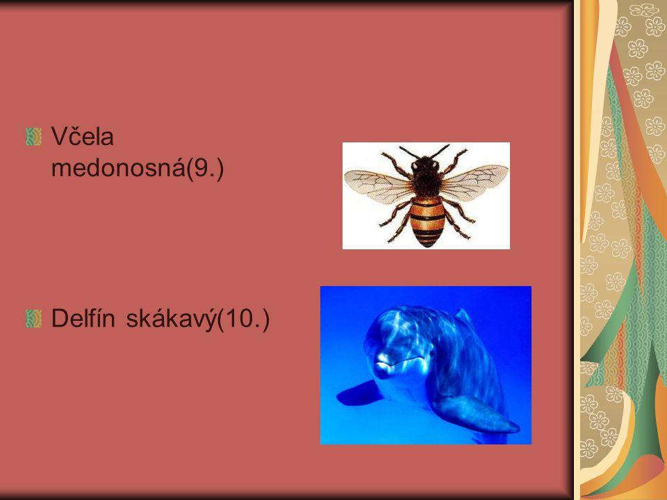 Včela medonosná(9.) Delfín skákavý(10.)