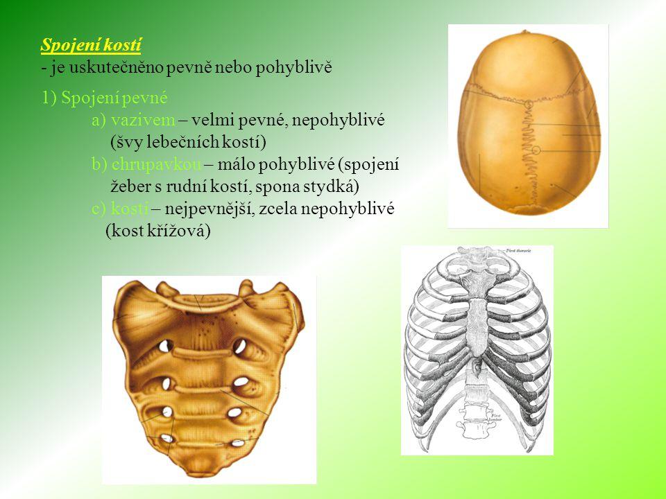 Spojení kostí - je uskutečněno pevně nebo pohyblivě 1) Spojení pevné a) vazivem – velmi pevné, nepohyblivé (švy lebečních kostí) b) chrupavkou – málo pohyblivé (spojení žeber s rudní kostí, spona stydká) c) kostí – nejpevnější, zcela nepohyblivé (kost křížová)
