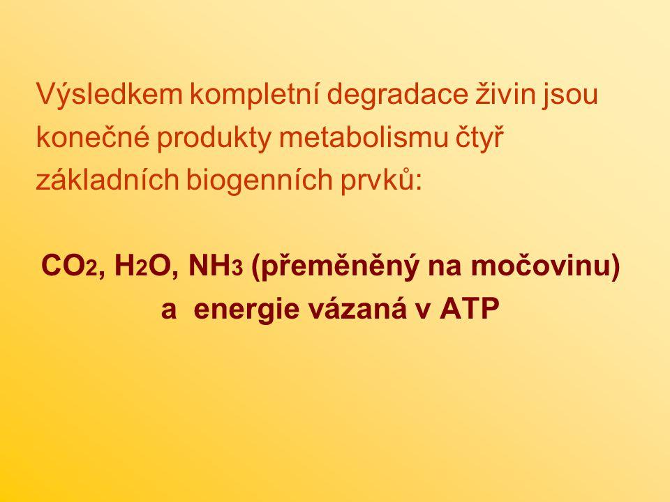 Výsledkem kompletní degradace živin jsou konečné produkty metabolismu čtyř základních biogenních prvků: CO 2, H 2 O, NH 3 (přeměněný na močovinu) a energie vázaná v ATP