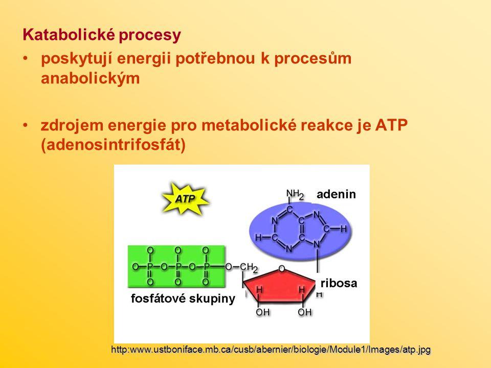 Katabolické procesy poskytují energii potřebnou k procesům anabolickým zdrojem energie pro metabolické reakce je ATP (adenosintrifosfát) http:www.ustboniface.mb.ca/cusb/abernier/biologie/Module1/Images/atp.jpg