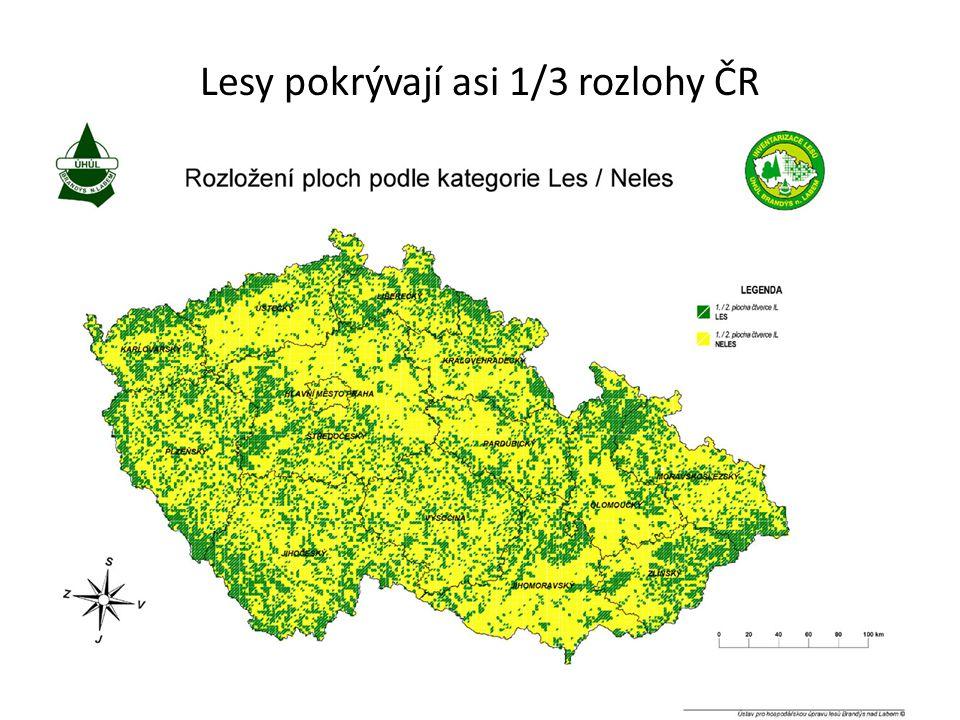 Lesy pokrývají asi 1/3 rozlohy ČR