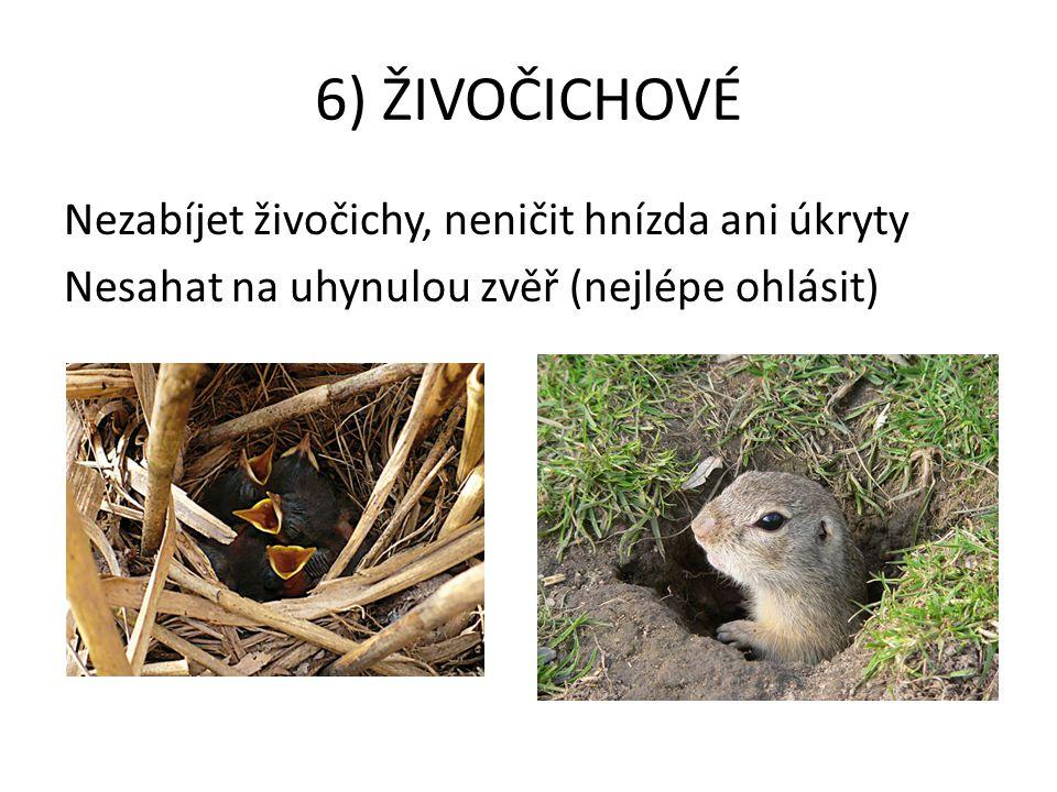 6) ŽIVOČICHOVÉ Nezabíjet živočichy, neničit hnízda ani úkryty Nesahat na uhynulou zvěř (nejlépe ohlásit)