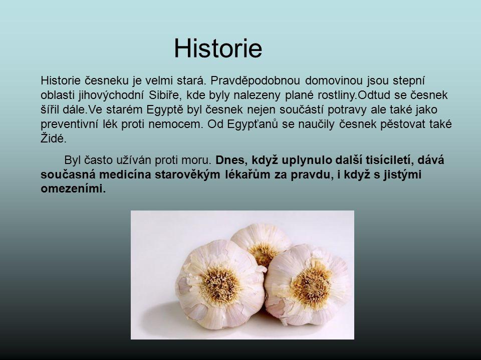 Historie Historie česneku je velmi stará. Pravděpodobnou domovinou jsou stepní oblasti jihovýchodní Sibiře, kde byly nalezeny plané rostliny.Odtud se