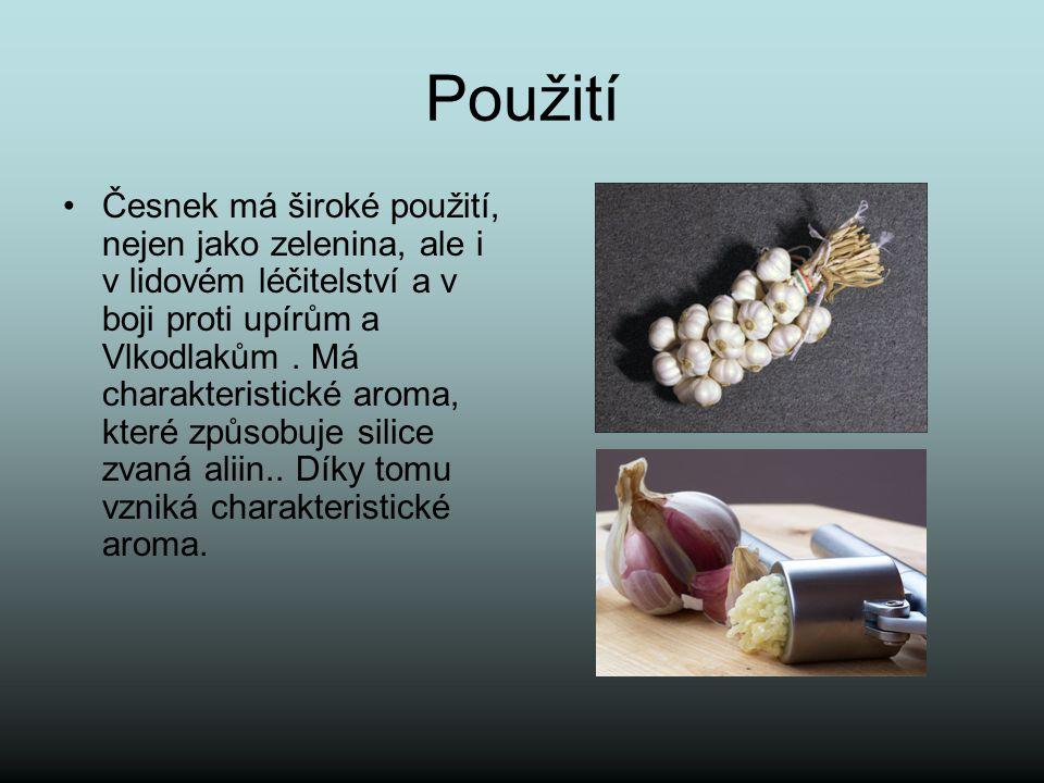 Použití Česnek má široké použití, nejen jako zelenina, ale i v lidovém léčitelství a v boji proti upírům a Vlkodlakům. Má charakteristické aroma, kter