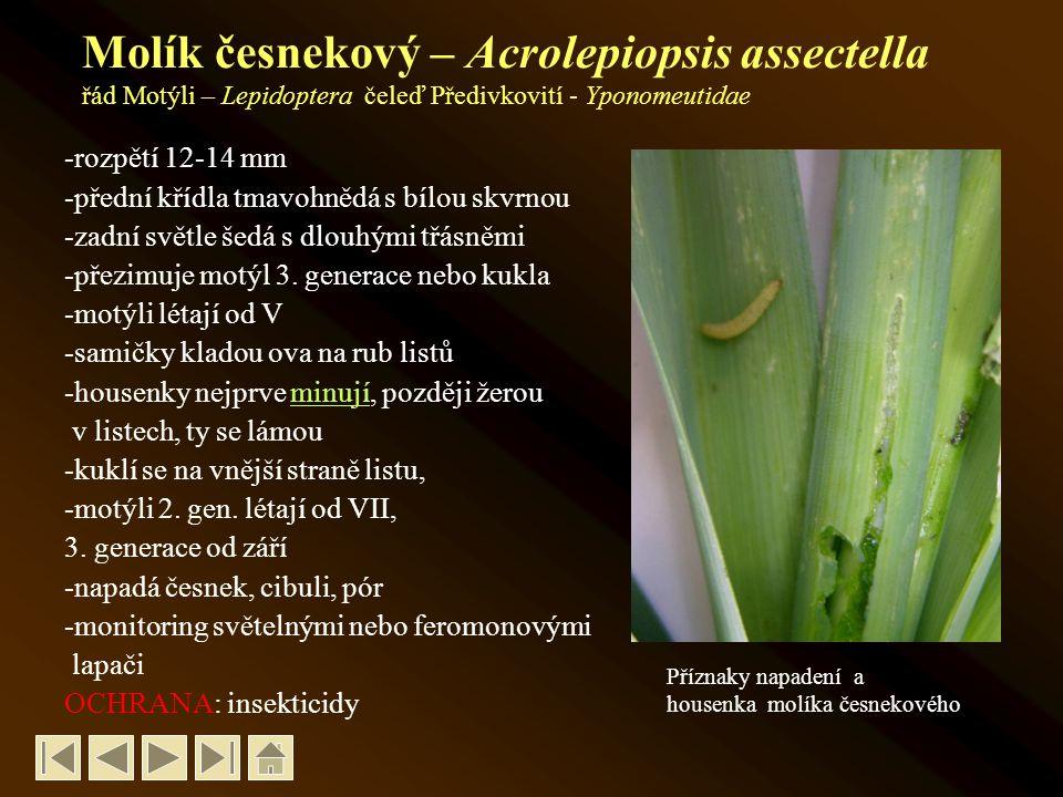 Chřestovníček cibulový – Lilioceris merdigera řád Brouci - Coleoptera, čeleď Mandelinkovití - Chrysomelidae -velikost brouka 6-8 mm -zbarvení červené, tykadla černá -vajíčka oranžová, později červenohnědá -larvy velké 6-8 mm, pokryté slizem -ožírají nadzemní části liliovitých -kuklí se v půdě -přezimují brouci -ročně má 2 generace OCHRANA: insekticidy