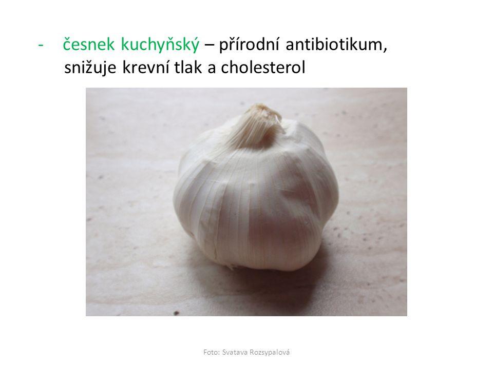 -česnek kuchyňský – přírodní antibiotikum, snižuje krevní tlak a cholesterol Foto: Svatava Rozsypalová