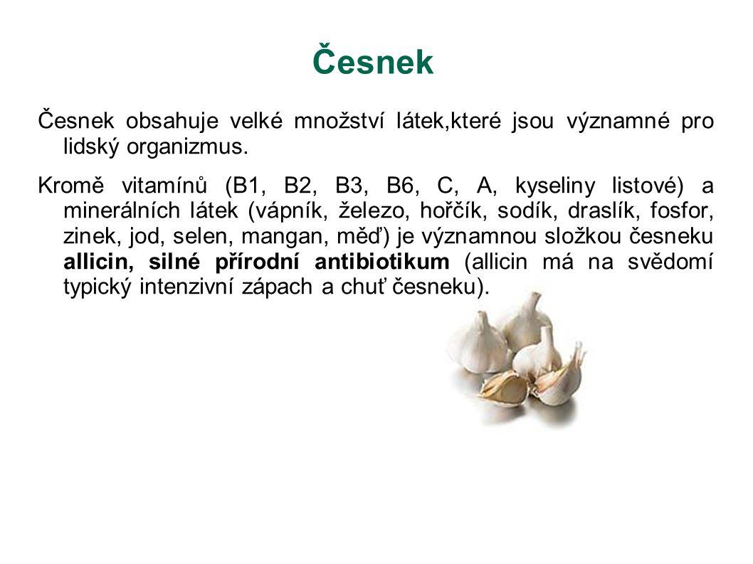 Česnek Česnek obsahuje velké množství látek,které jsou významné pro lidský organizmus. Kromě vitamínů (B1, B2, B3, B6, C, A, kyseliny listové) a miner