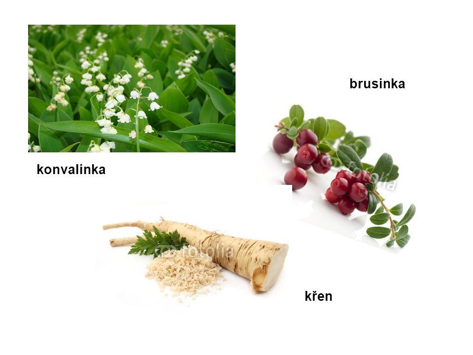 brusinka konvalinka křen