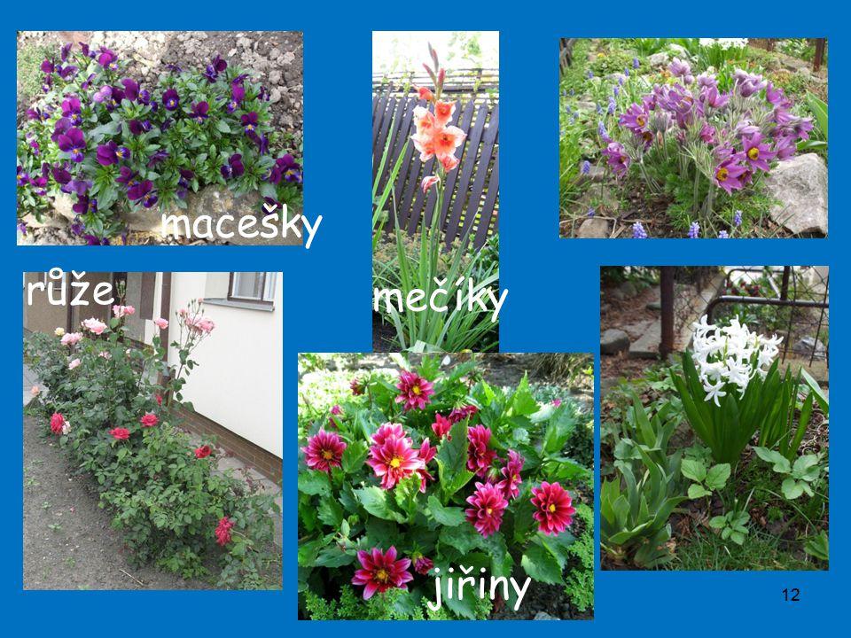 12 růže mečíky jiřiny macešky
