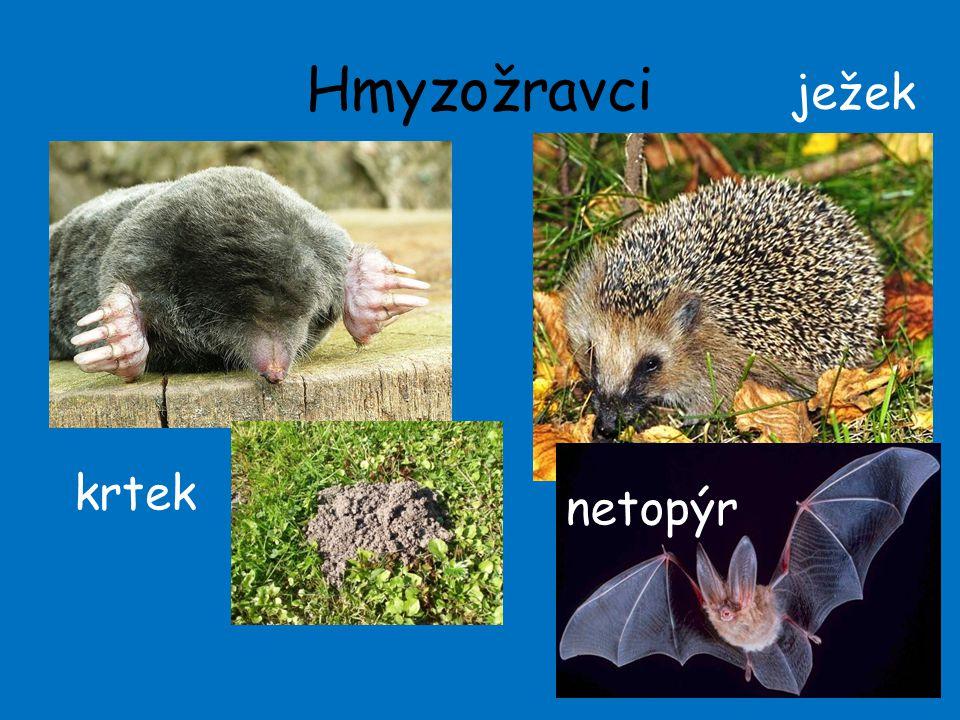 Hmyzožravci 13 krtek ježek netopýr