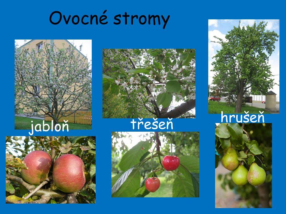 Ovocné stromy 3 jabloň třešeň hrušeň