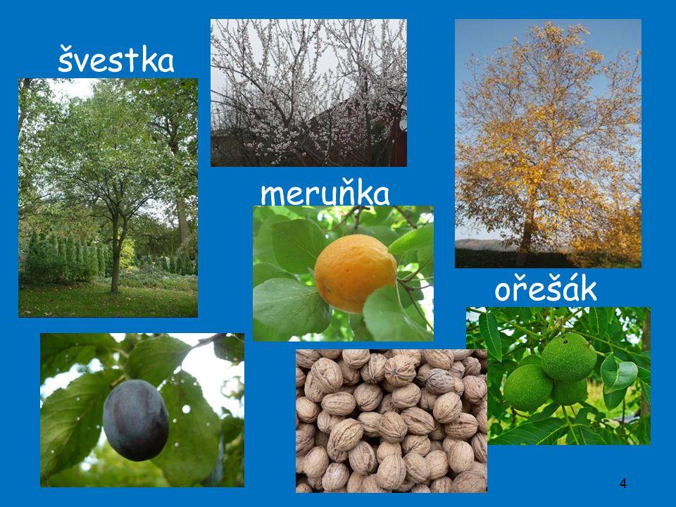 4 švestka meruňka ořešák