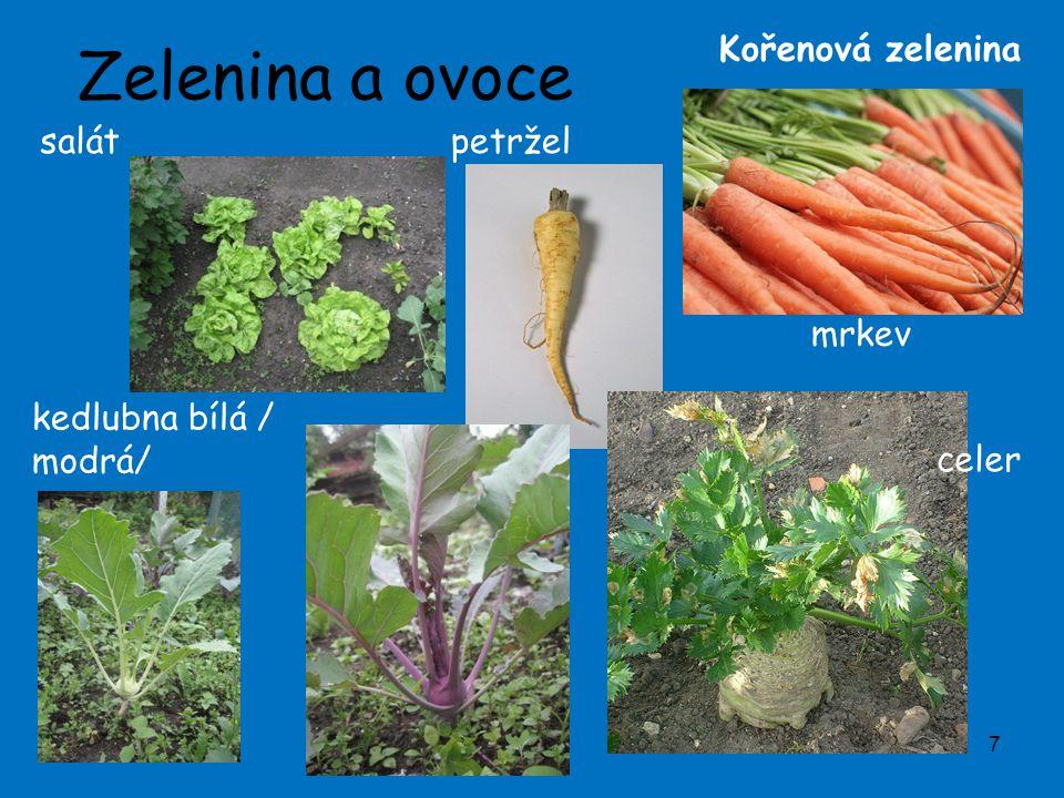 Zelenina a ovoce 7 petržel kedlubna bílá / modrá/ celer mrkev Kořenová zelenina salát