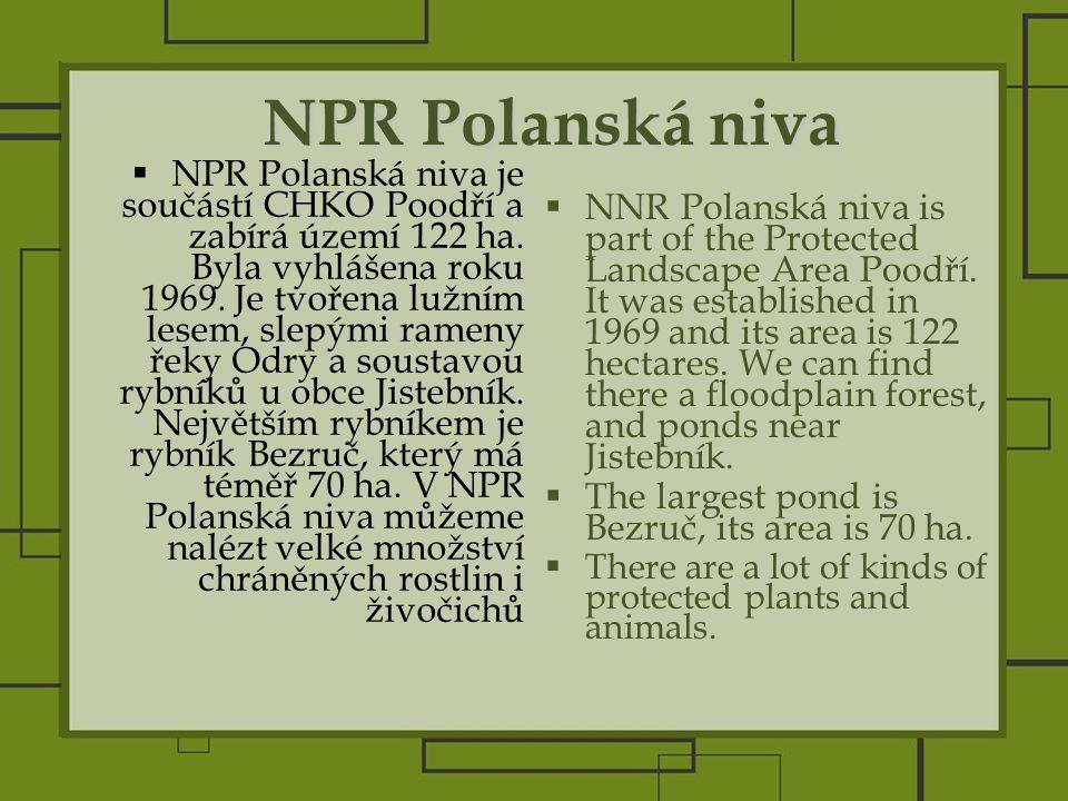 NPR Polanská niva  NPR Polanská niva je součástí CHKO Poodří a zabírá území 122 ha.