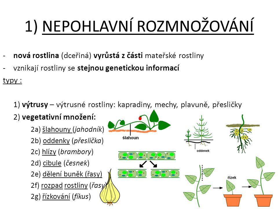 -nová rostlina (dceřiná) vyrůstá z části mateřské rostliny -vznikají rostliny se stejnou genetickou informací typy : 1) výtrusy – výtrusné rostliny: k