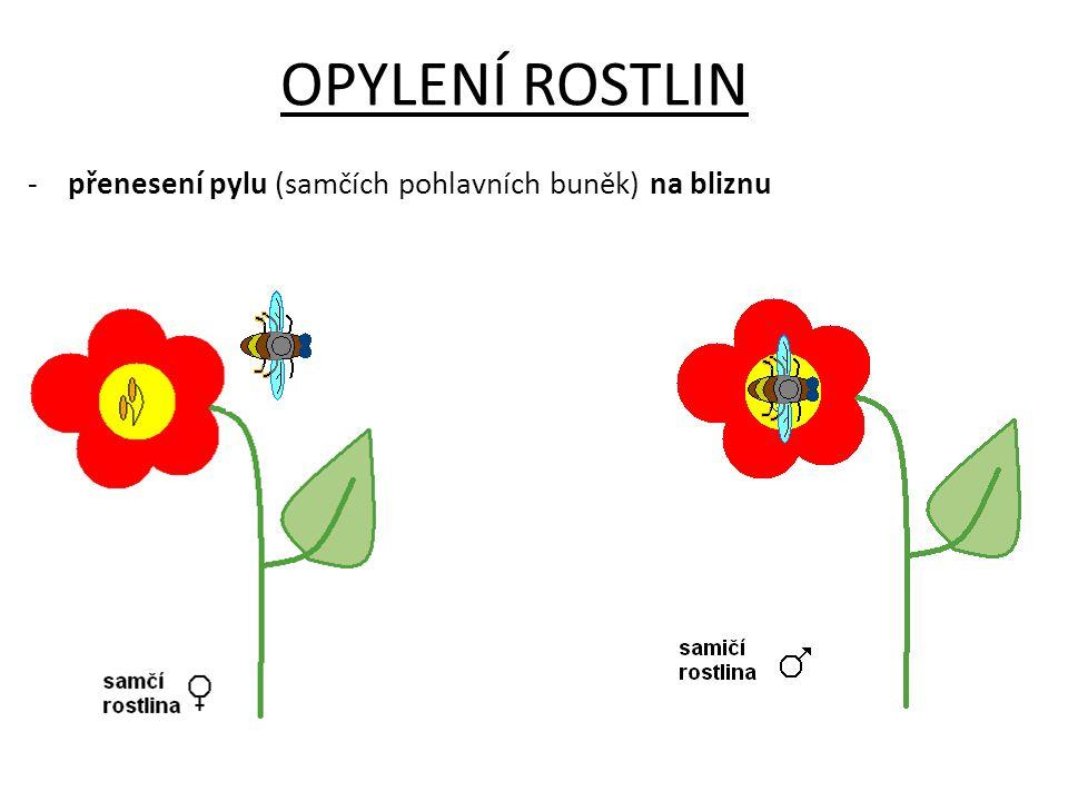 ZPŮSOBY OPYLENÍ rostliny mohou být opyleny: a) opylovači (včely, čmeláci, motýli) b) větrem c) vodou d) zvířata (netopýr) rostliny podle opylení dělíme na: a)cizosprašné – dochází k opylení od cizí rostliny b)samosprašné – dochází k opylení ve stejné rostlině Poznámka: Hmyz je lákán nektarem (sladkou šťávou), opylení je až vedlejší.