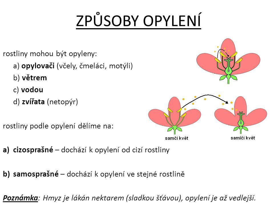 OPLOZENÍ 1)opylení – přenesení pylu na bliznu 2) vznik pylové láčky - z pylových zrn klíčí vlákno nesoucí pohlavní buňku 3) pylová láčka prorůstá čnělkou - pylové vlákno prorůstá k vajíčkům 4) oplození - splynutí samčí a samičí pohlavní buňky → vzniká buňka - ZYGOTA