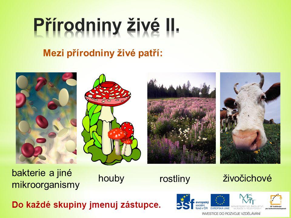 Mezi přírodniny živé patří: bakterie a jiné mikroorganismy houby rostliny živočichové Do každé skupiny jmenuj zástupce.