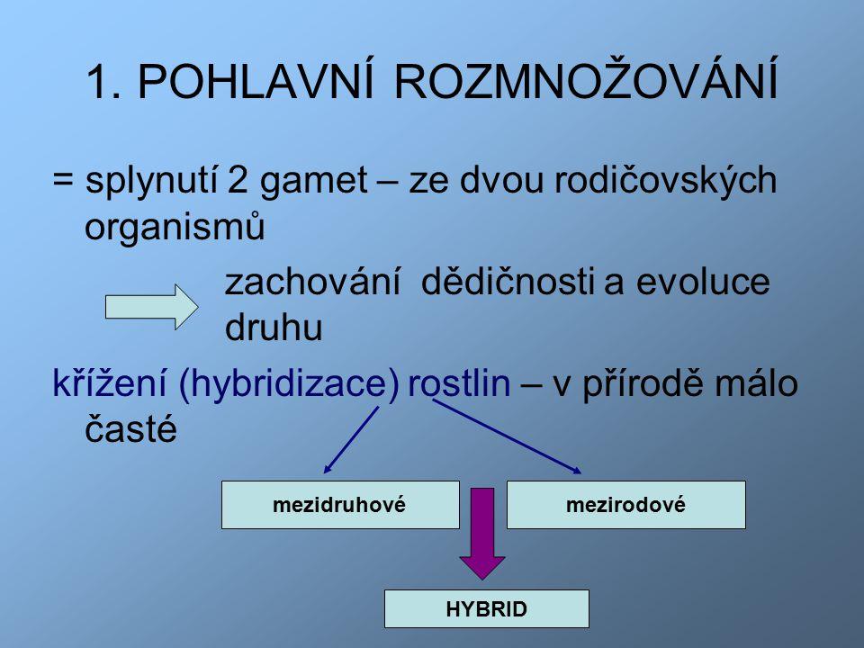 1. POHLAVNÍ ROZMNOŽOVÁNÍ = splynutí 2 gamet – ze dvou rodičovských organismů zachování dědičnosti a evoluce druhu křížení (hybridizace) rostlin – v př