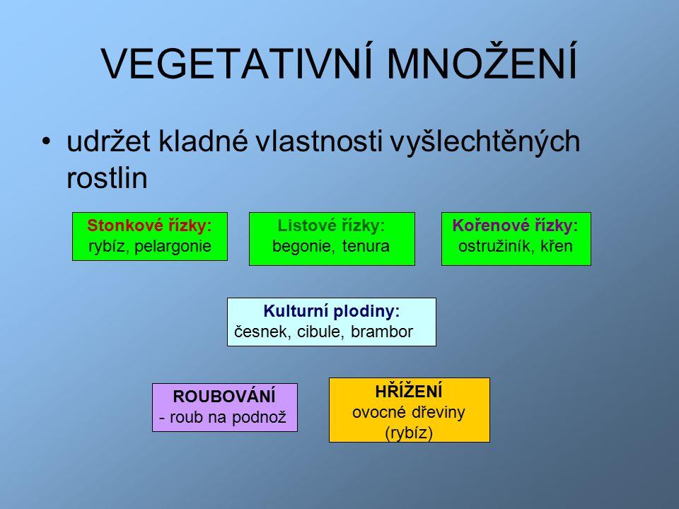 VEGETATIVNÍ MNOŽENÍ udržet kladné vlastnosti vyšlechtěných rostlin Kulturní plodiny: česnek, cibule, brambor Stonkové řízky: rybíz, pelargonie Kořenové řízky: ostružiník, křen Listové řízky: begonie, tenura HŘÍŽENÍ ovocné dřeviny (rybíz) ROUBOVÁNÍ - roub na podnož