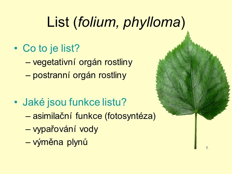 List (folium, phylloma) Co to je list? –vegetativní orgán rostliny –postranní orgán rostliny Jaké jsou funkce listu? –asimilační funkce (fotosyntéza)