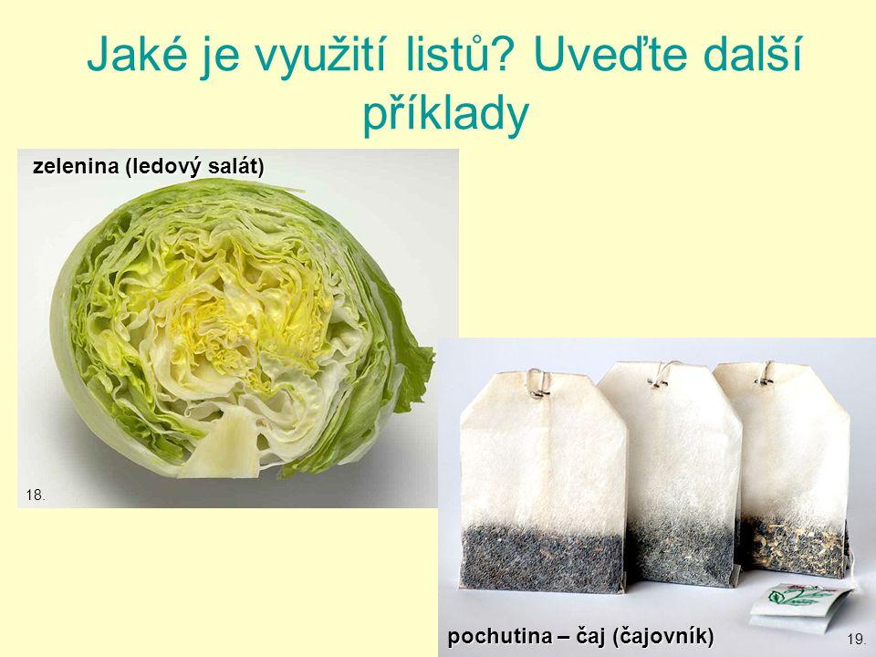 Jaké je využití listů.Uveďte další příklady zelenina (ledový salát) pochutina – čaj (čajovník) 18.