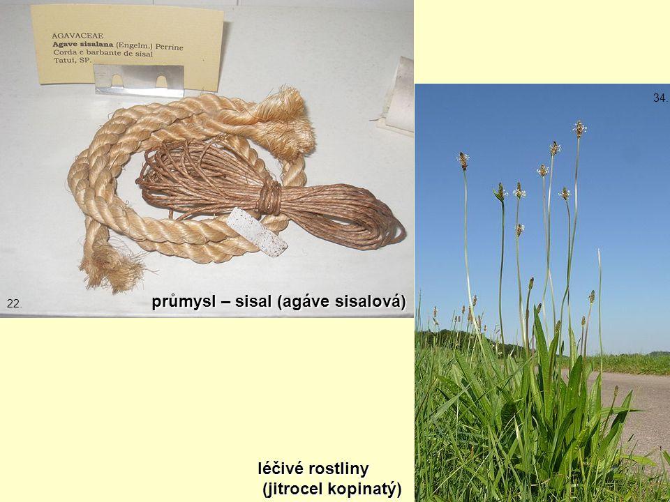 průmysl – sisal (agáve sisalová) léčivé rostliny (jitrocel kopinatý) (jitrocel kopinatý) 22. 34.